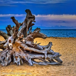 Driftwood at Hammonasset Beach State Park