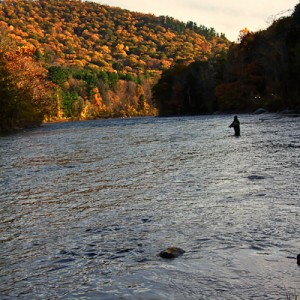 Fly Fisherman in Housatonic River, Sharon Connecticut